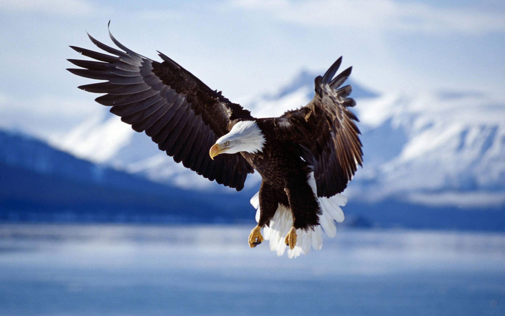 awesome in flight wallpaper 38332