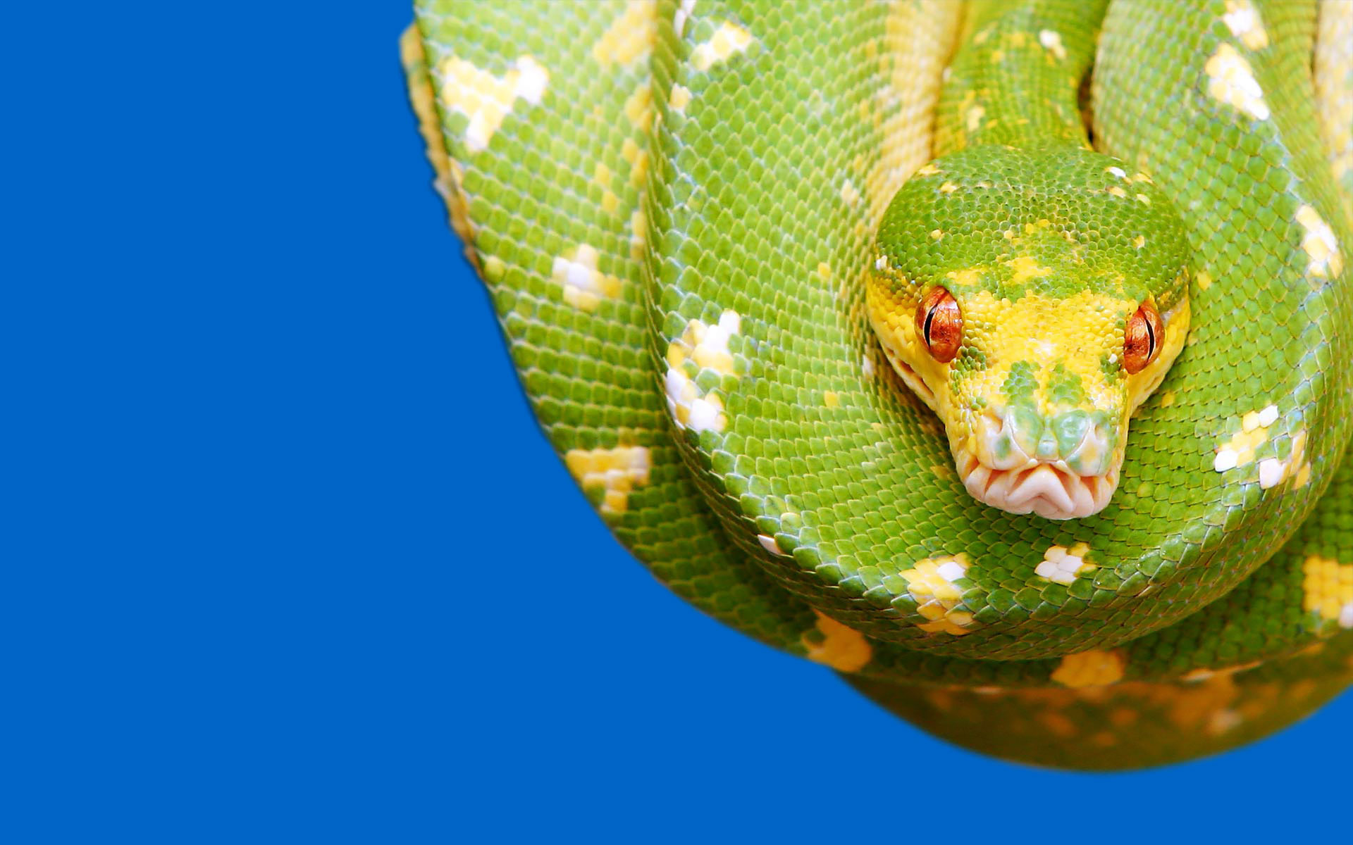 awesome python wallpaper 38502