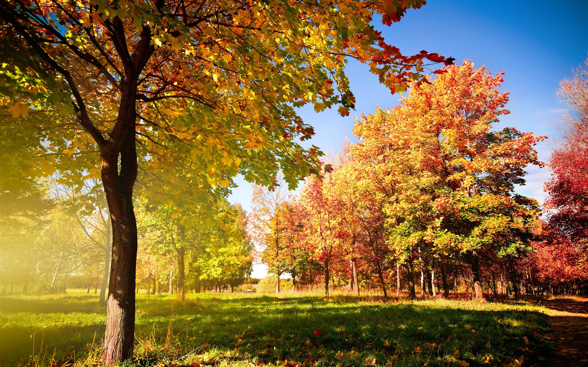 beautiful autumn leaves wallpaper 44436