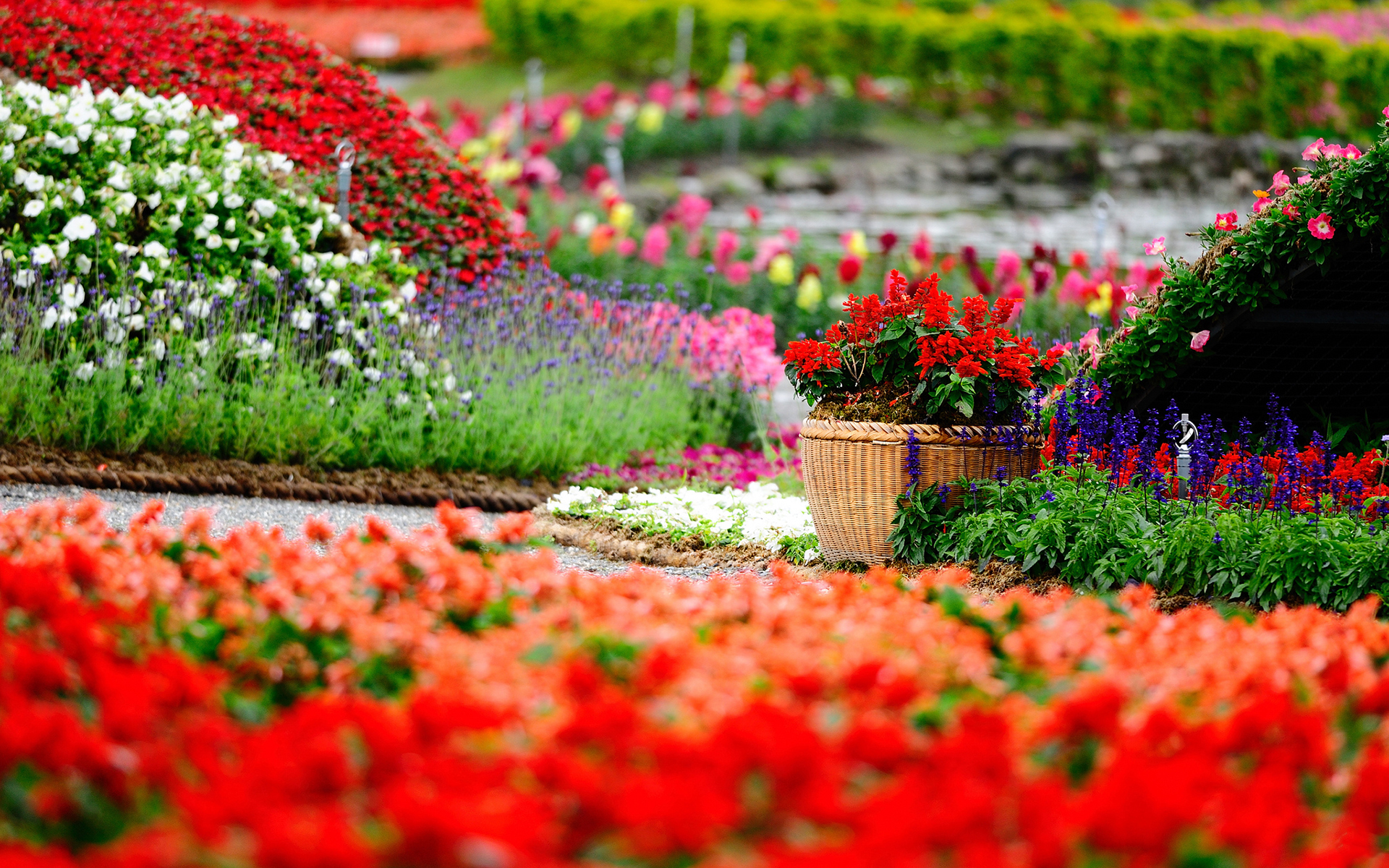 beautiful flower park wallpaper 44704