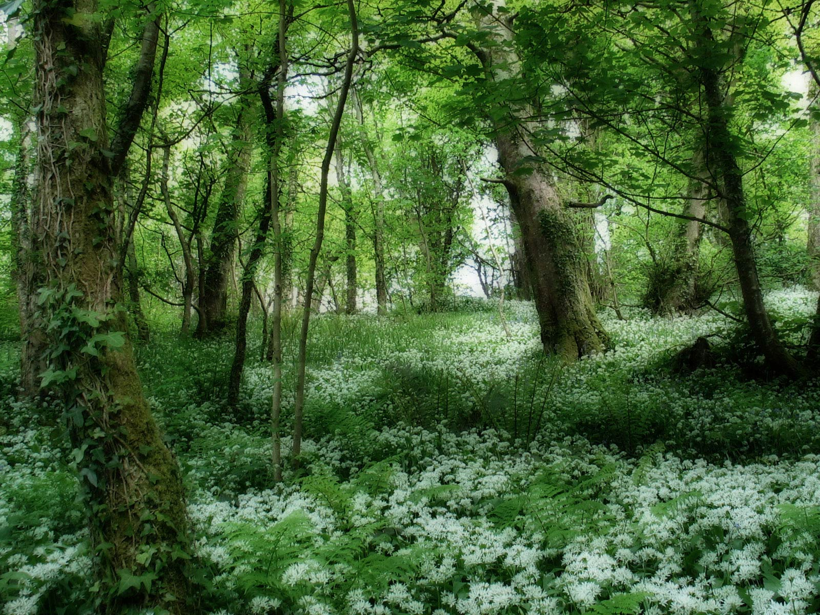 beautiful forest wallpapers 21505