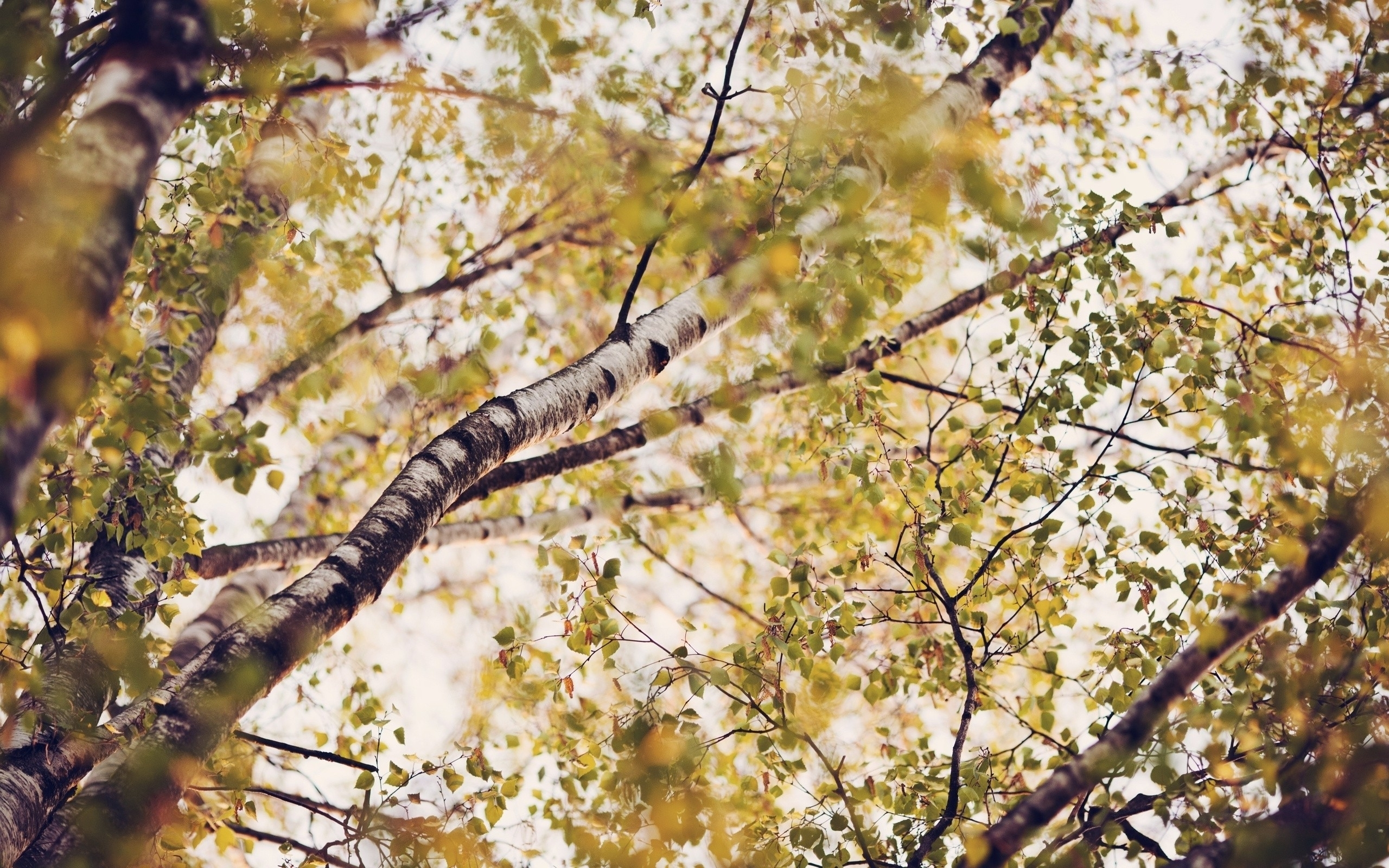 beautiful nature branches wallpaper 44907