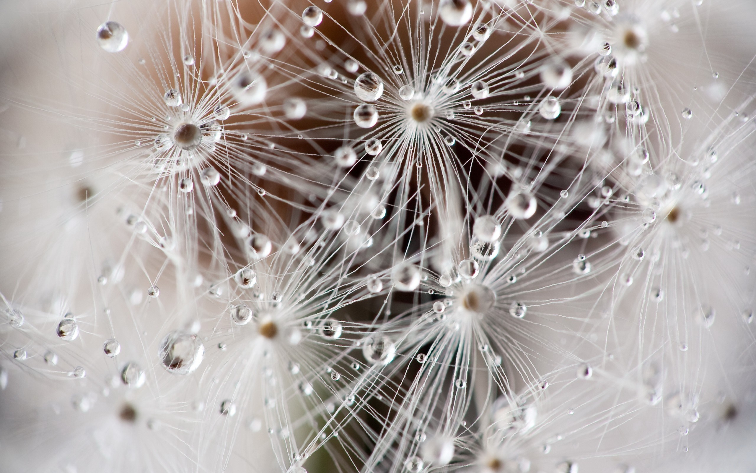 cool dandelion seeds wallpaper 42643