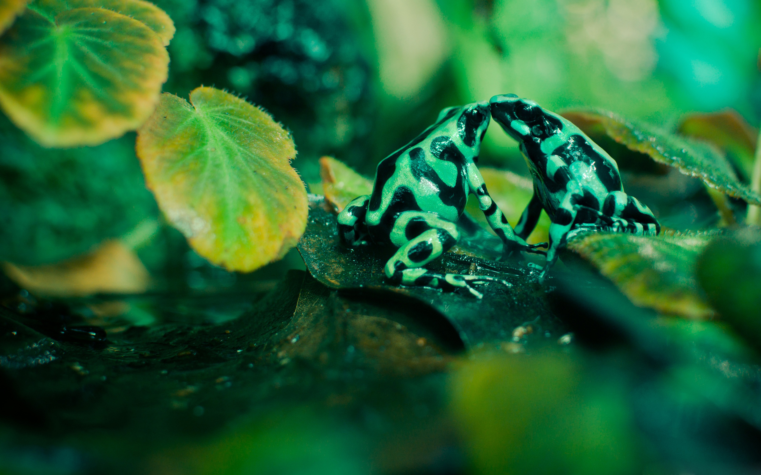 cute frog wallpaper 44316