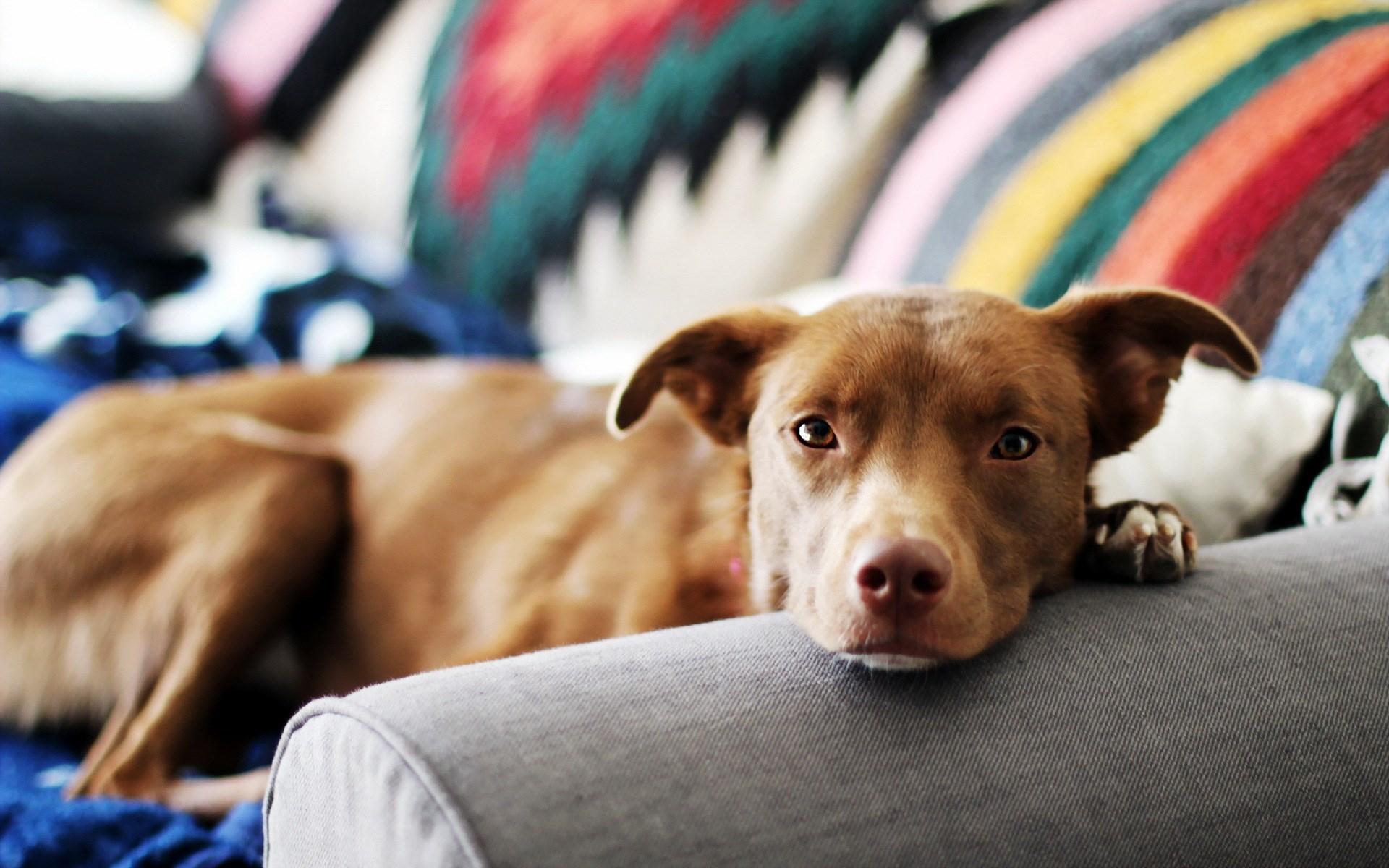 fantastic dog bed wallpaper 43749