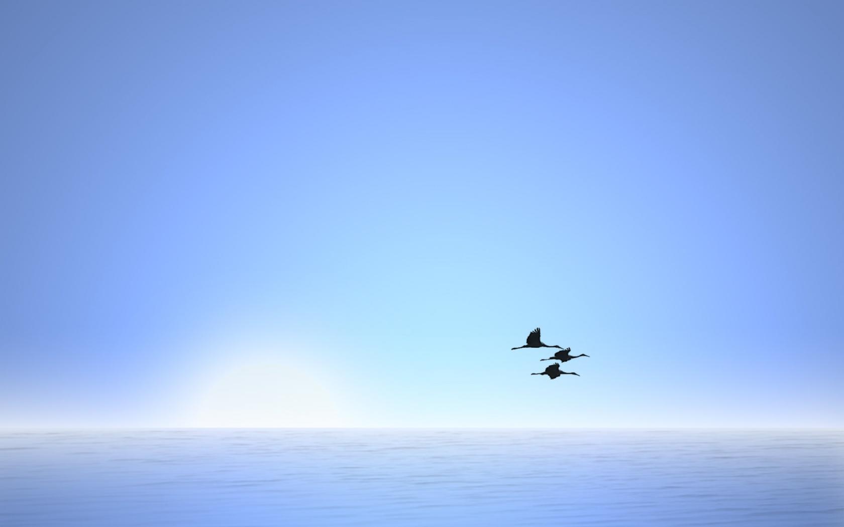 free in flight wallpaper 38340