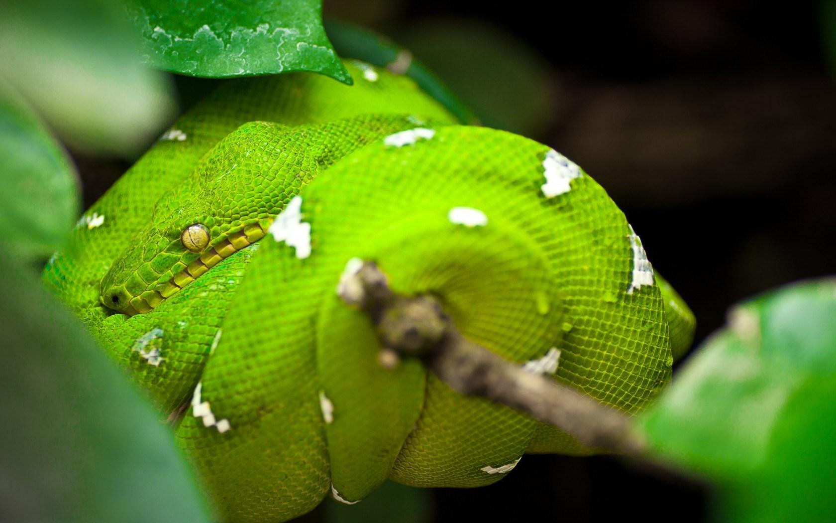 free python wallpaper 38501