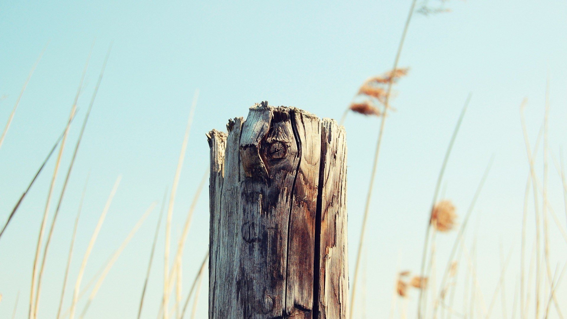 free tree stump wallpaper 43760