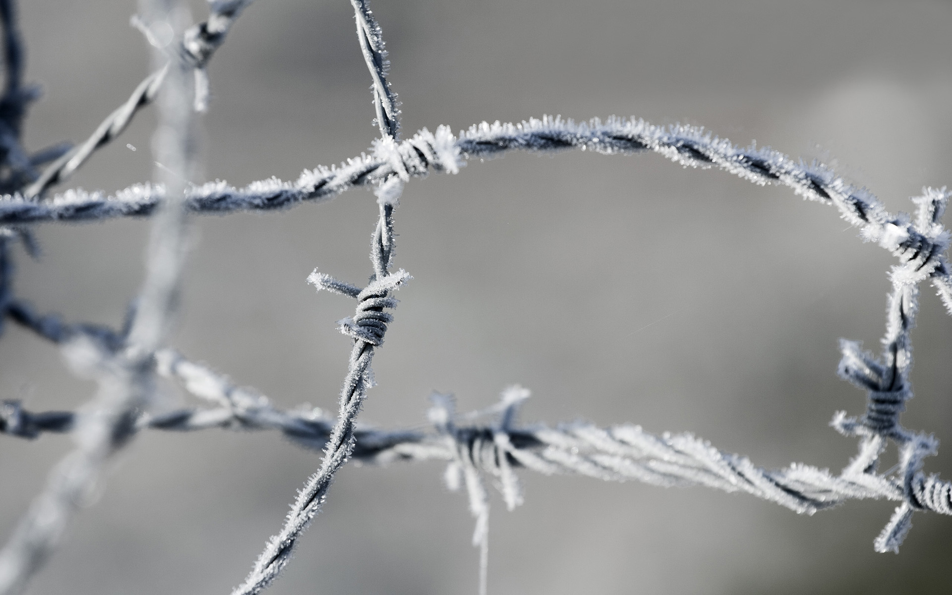frozen barbed wire fence wallpaper 44957