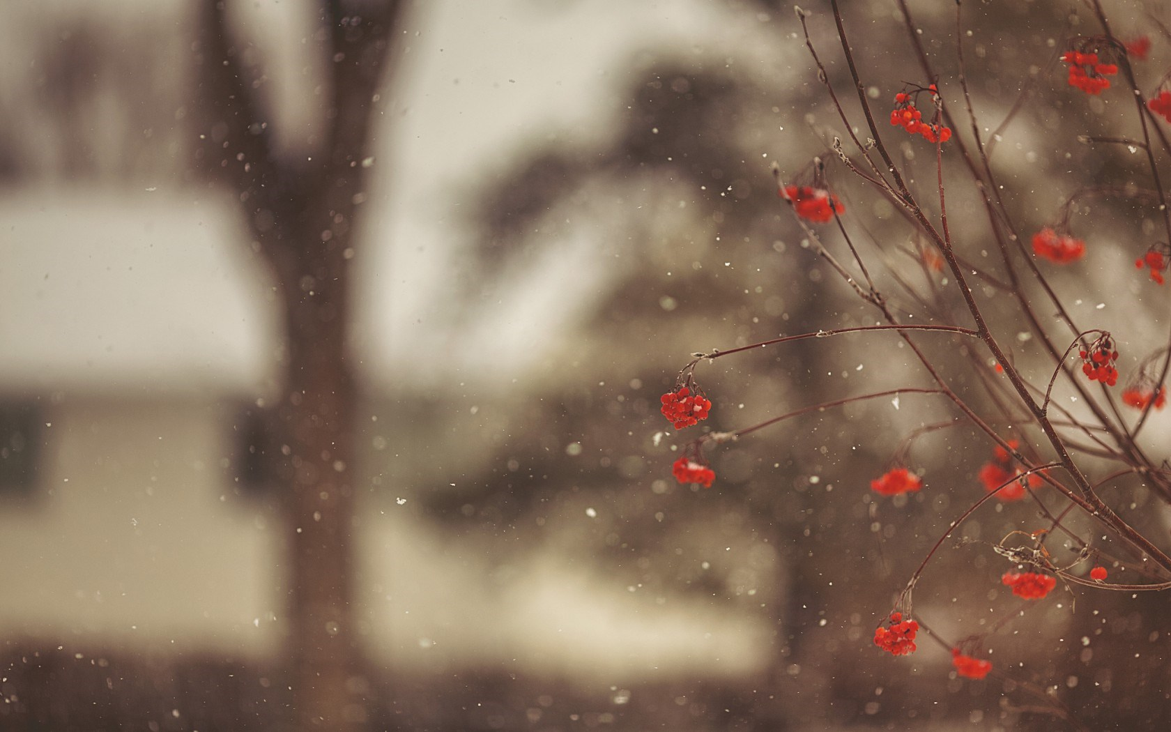 frozen red berries wallpaper 44418