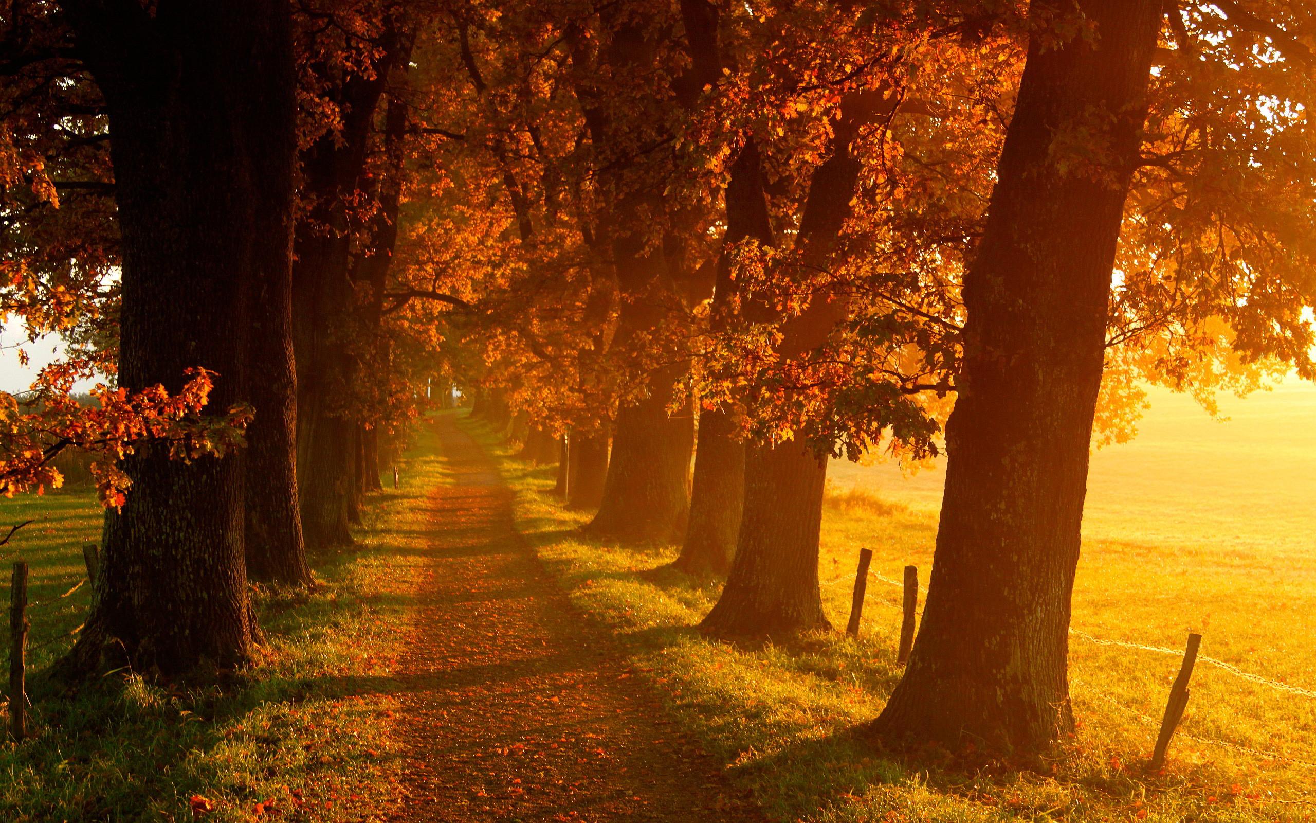 gorgeous autumn wallpaper 44428