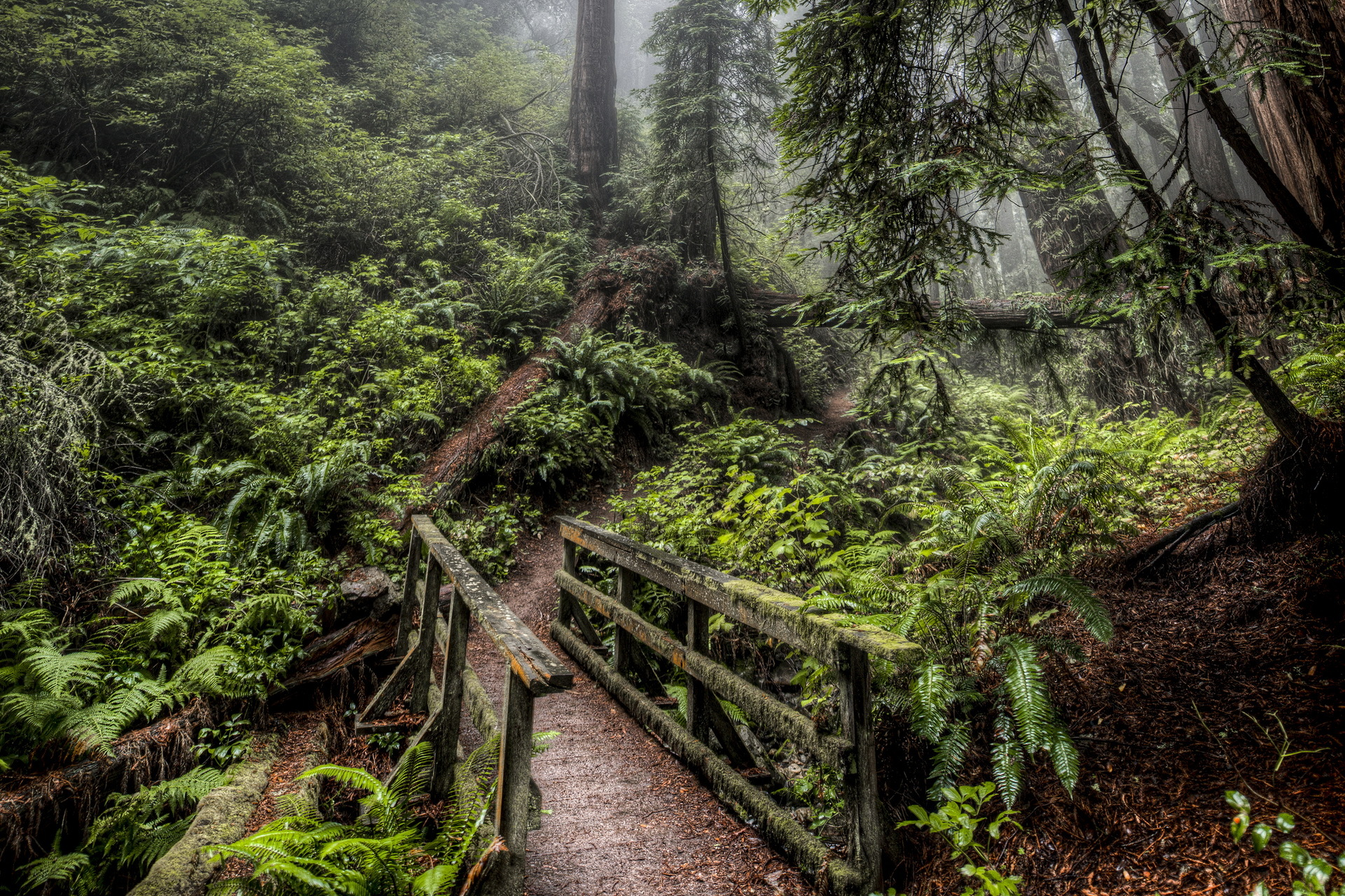 gorgeous hdr forest wallpaper 38919