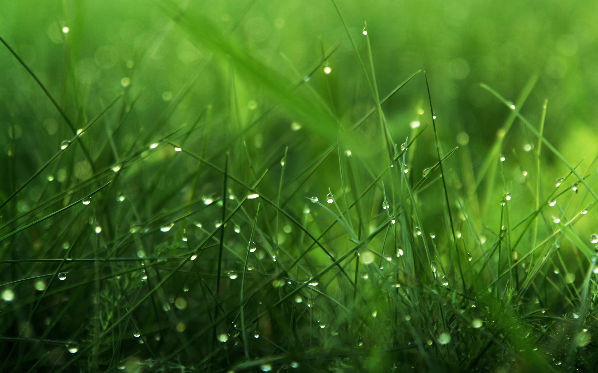 grass background. grass background 18855