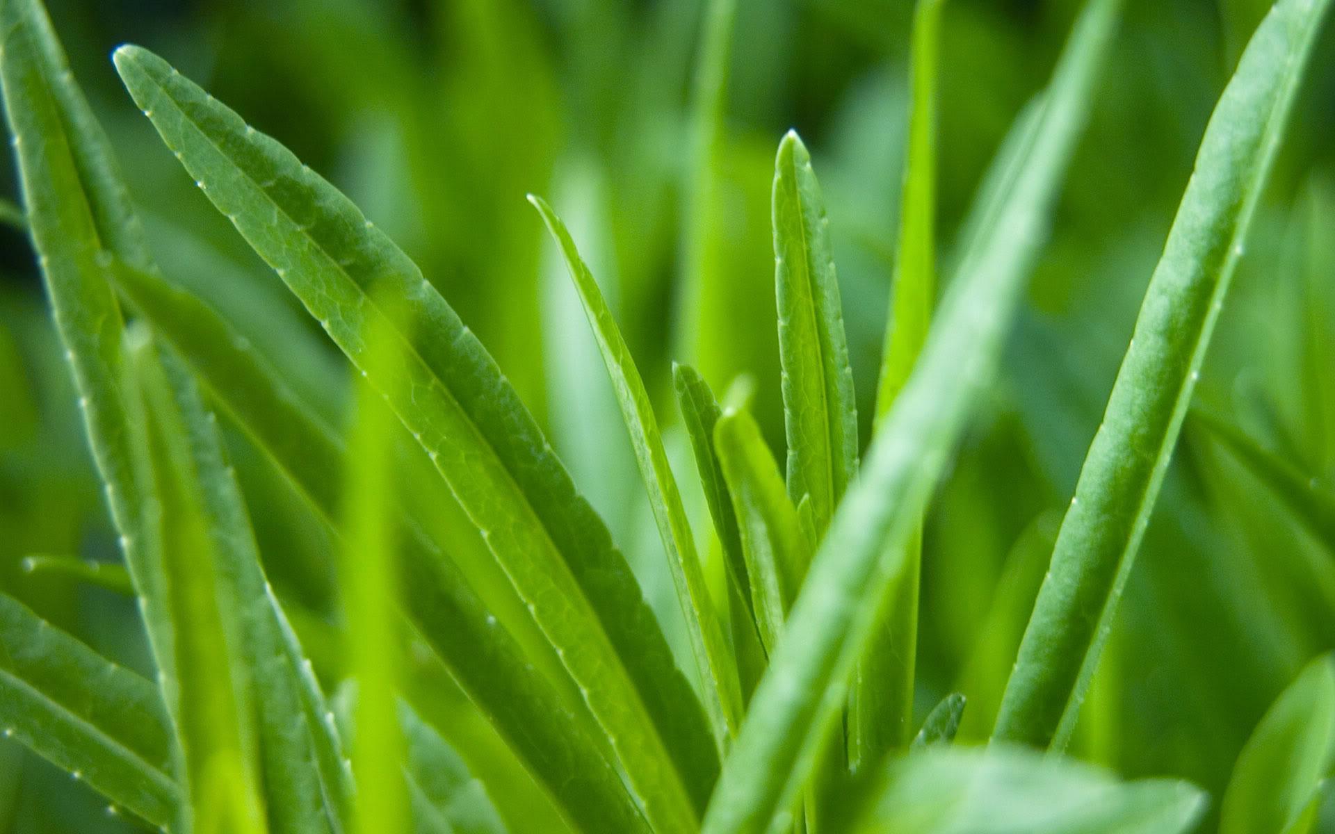 hd grass background 18872