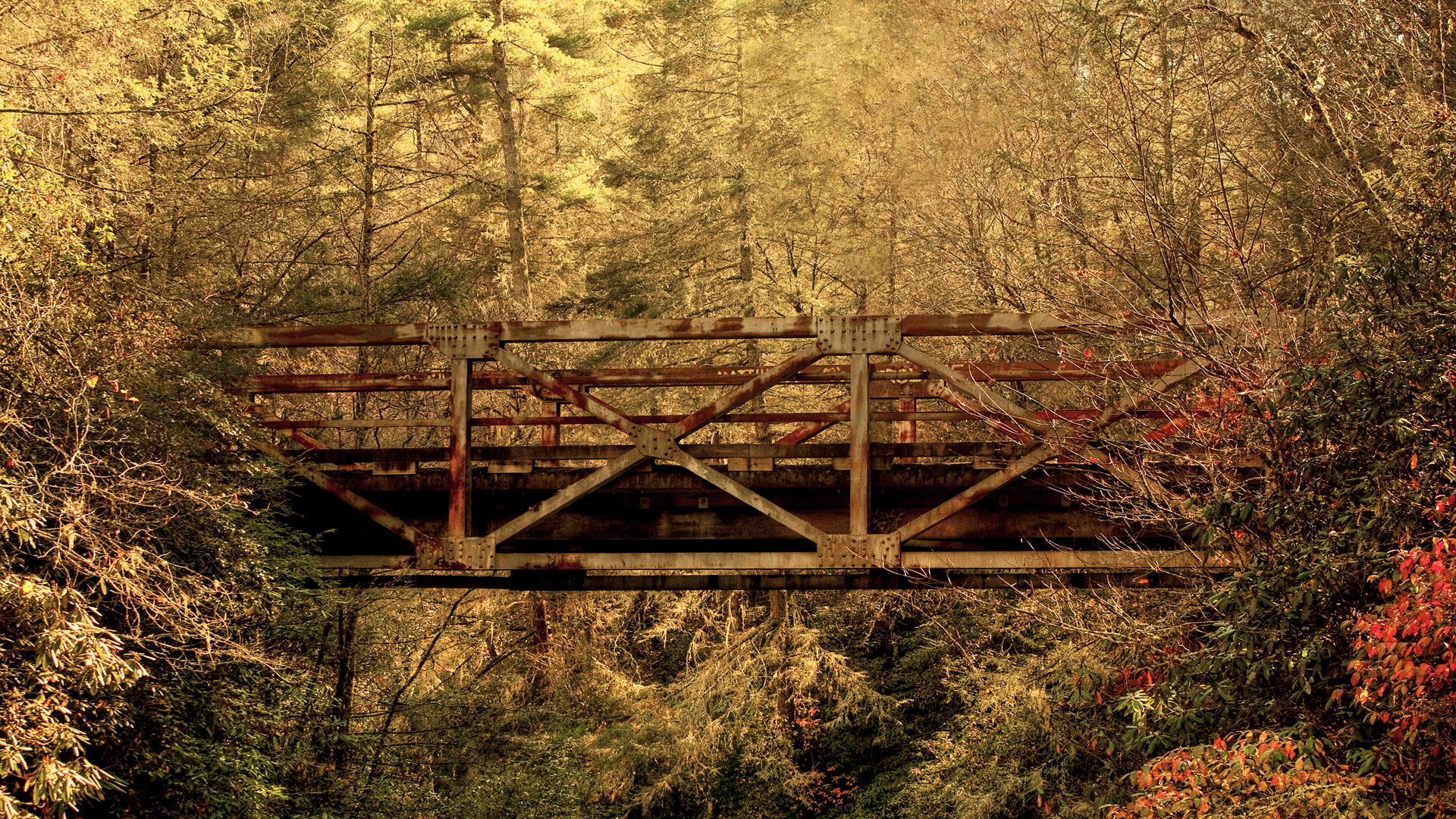 hdr forest 38918