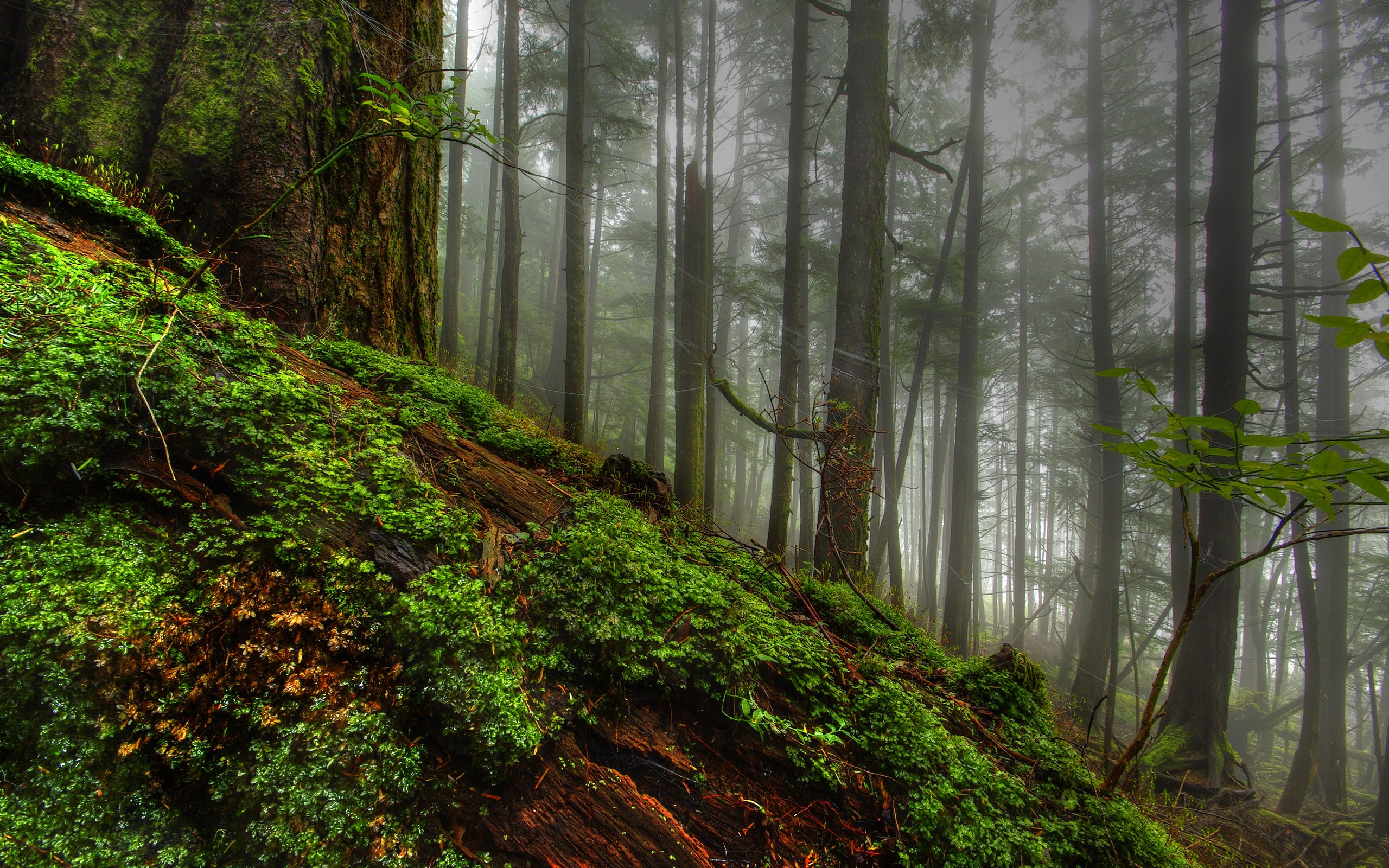 hdr forest background 38917
