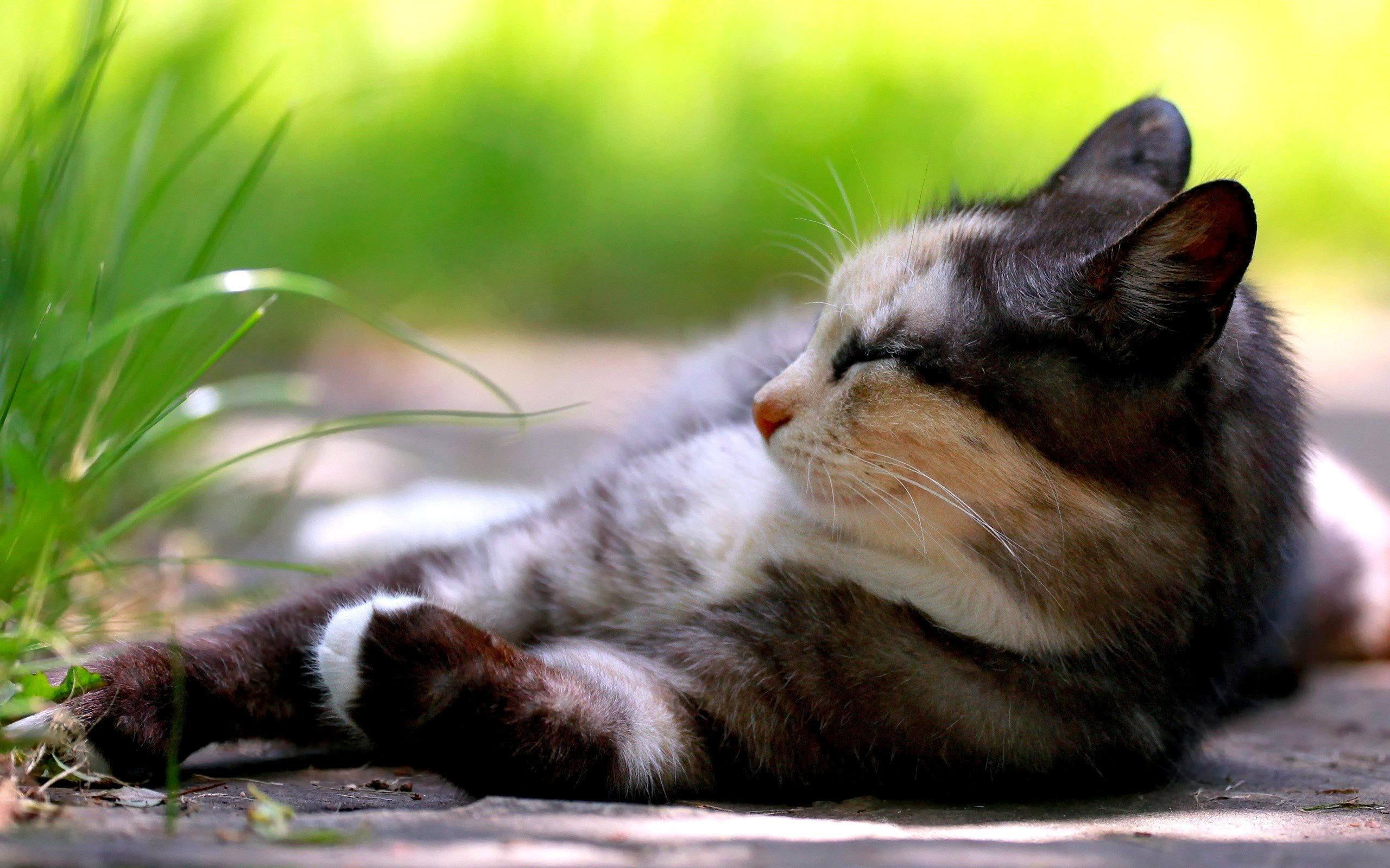 kitten rest wallpaper 44711