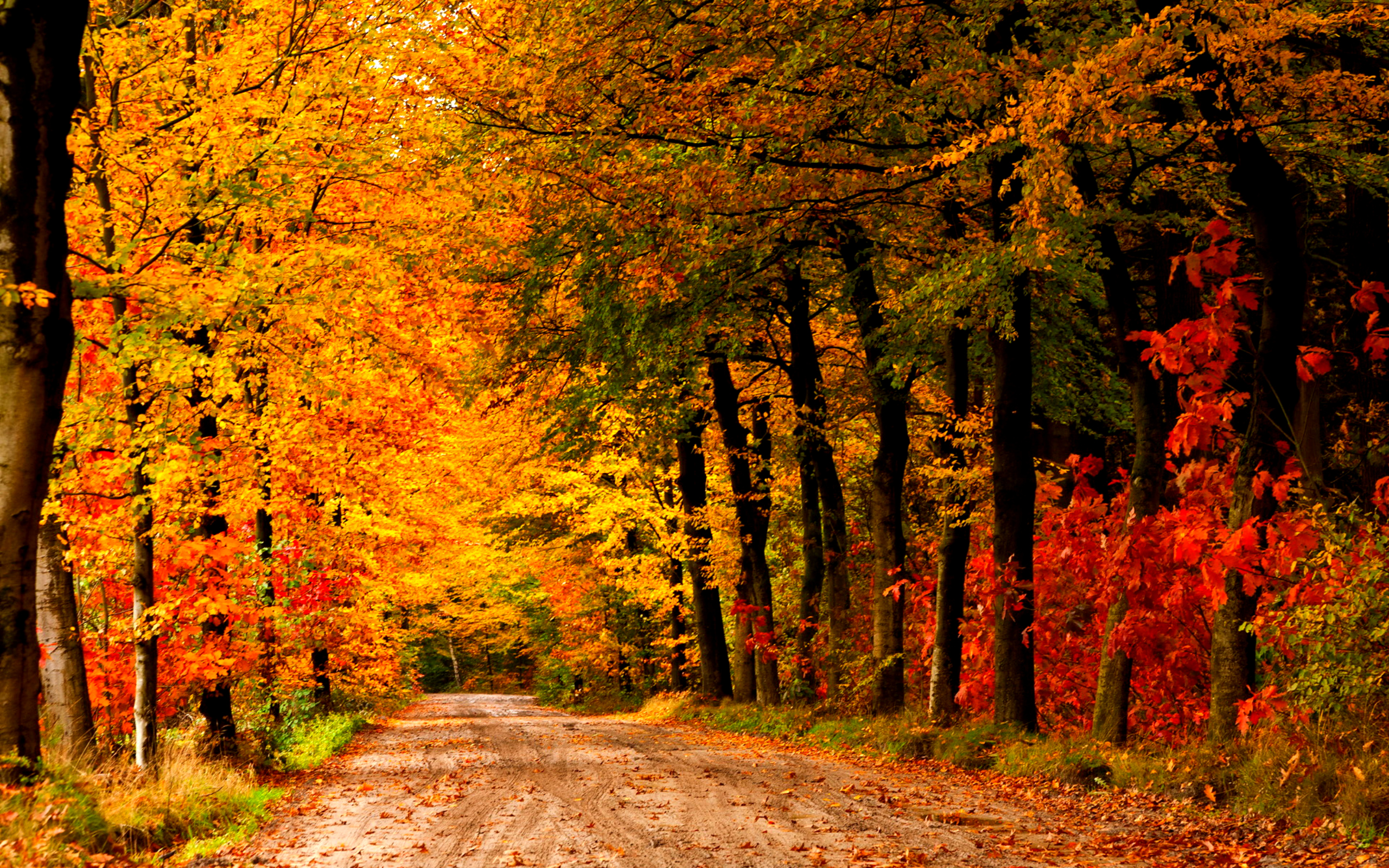 lovely autumn wallpaper 44427