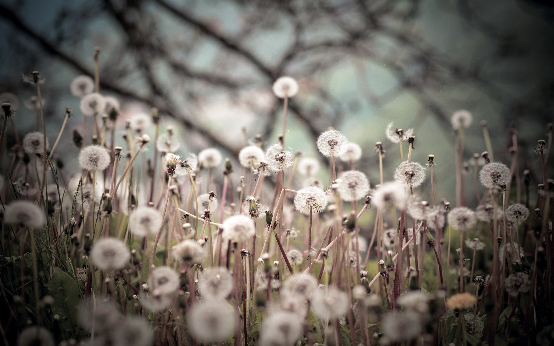 lovely dandelion seeds wallpaper 42637