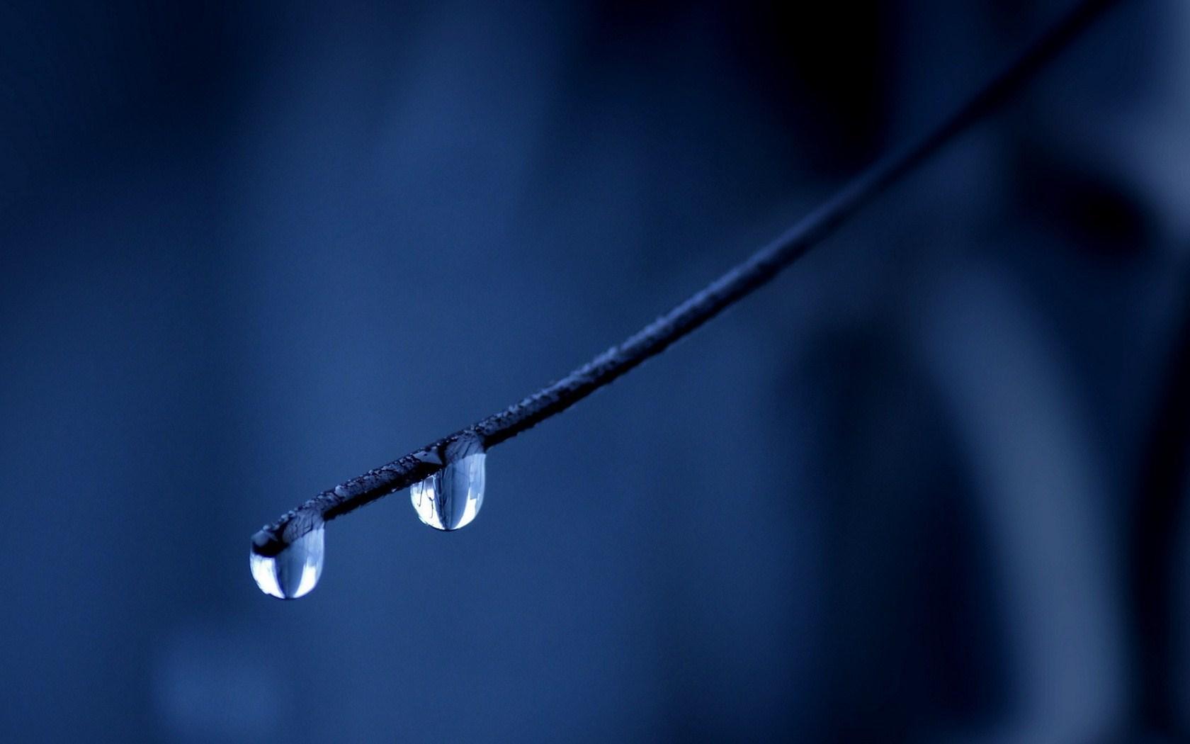 mood nature dew wallpaper 43959