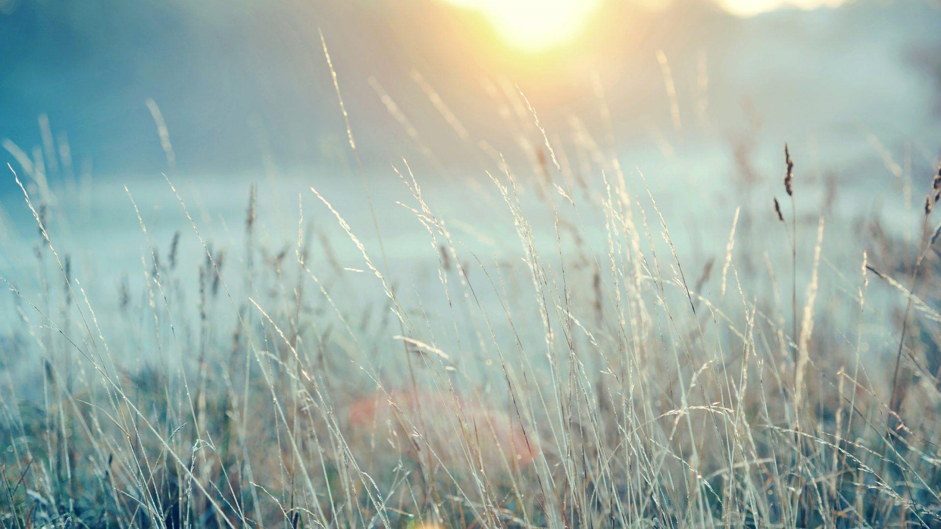 morning sunshine wallpaper 43934