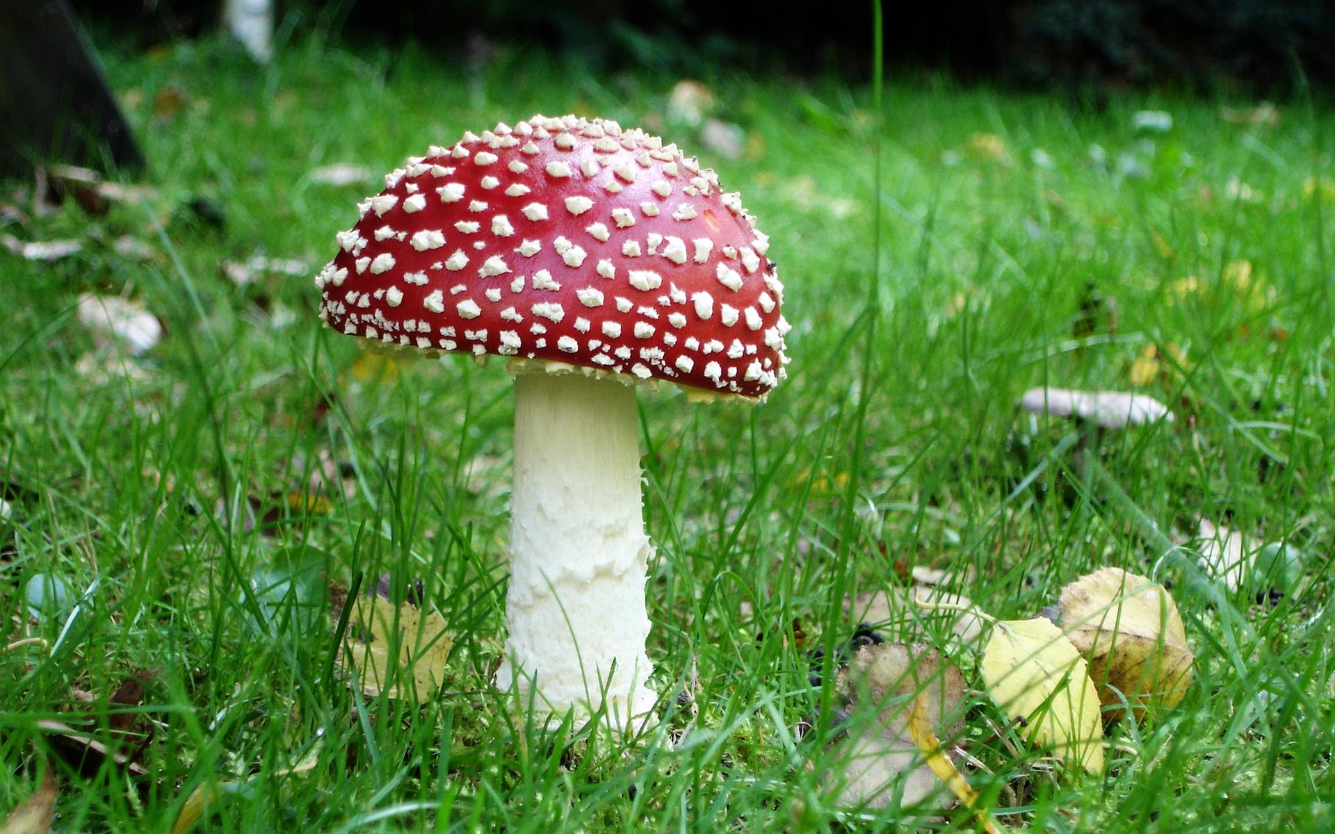mushroom pictures 27499