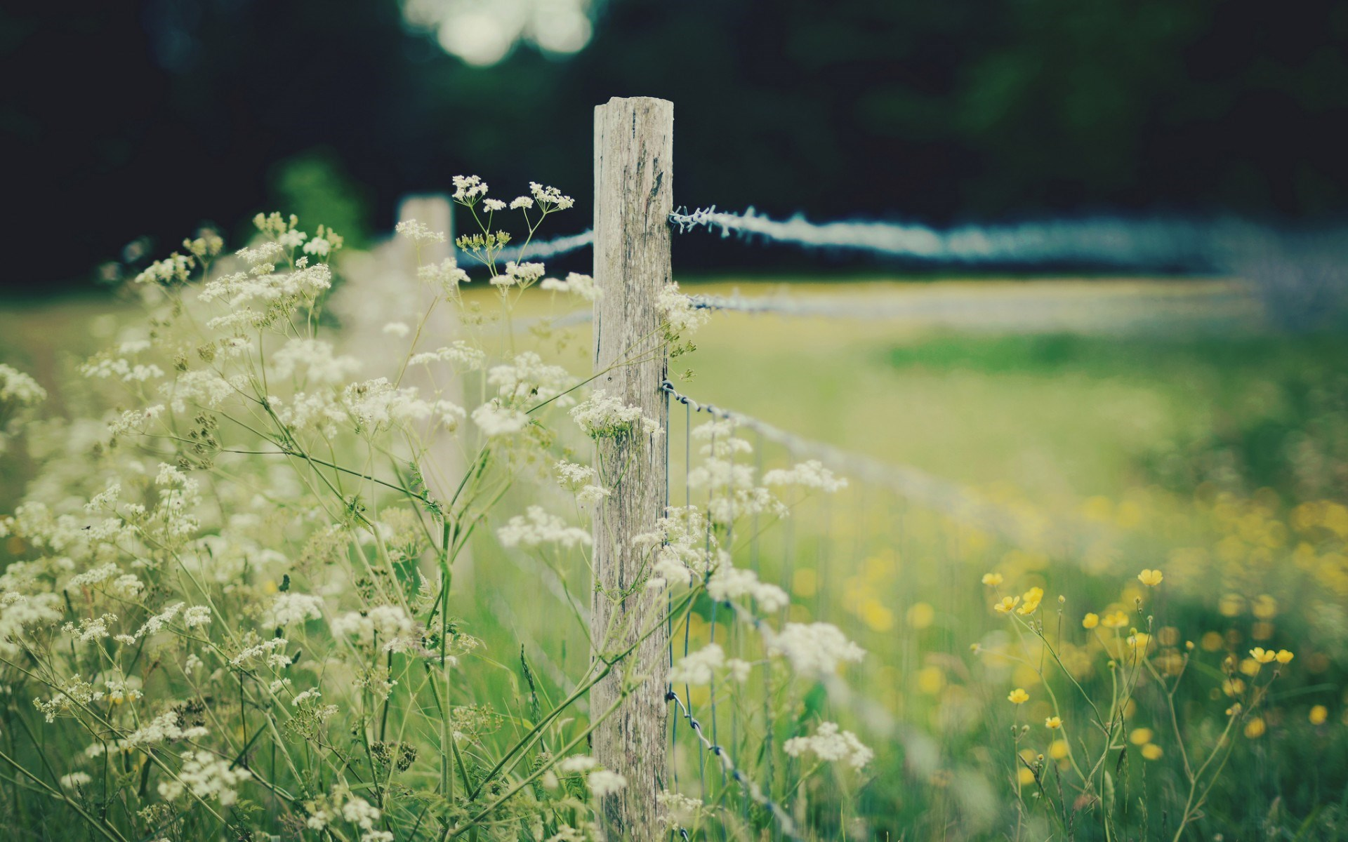nature barbed wire fence wallpaper 44969