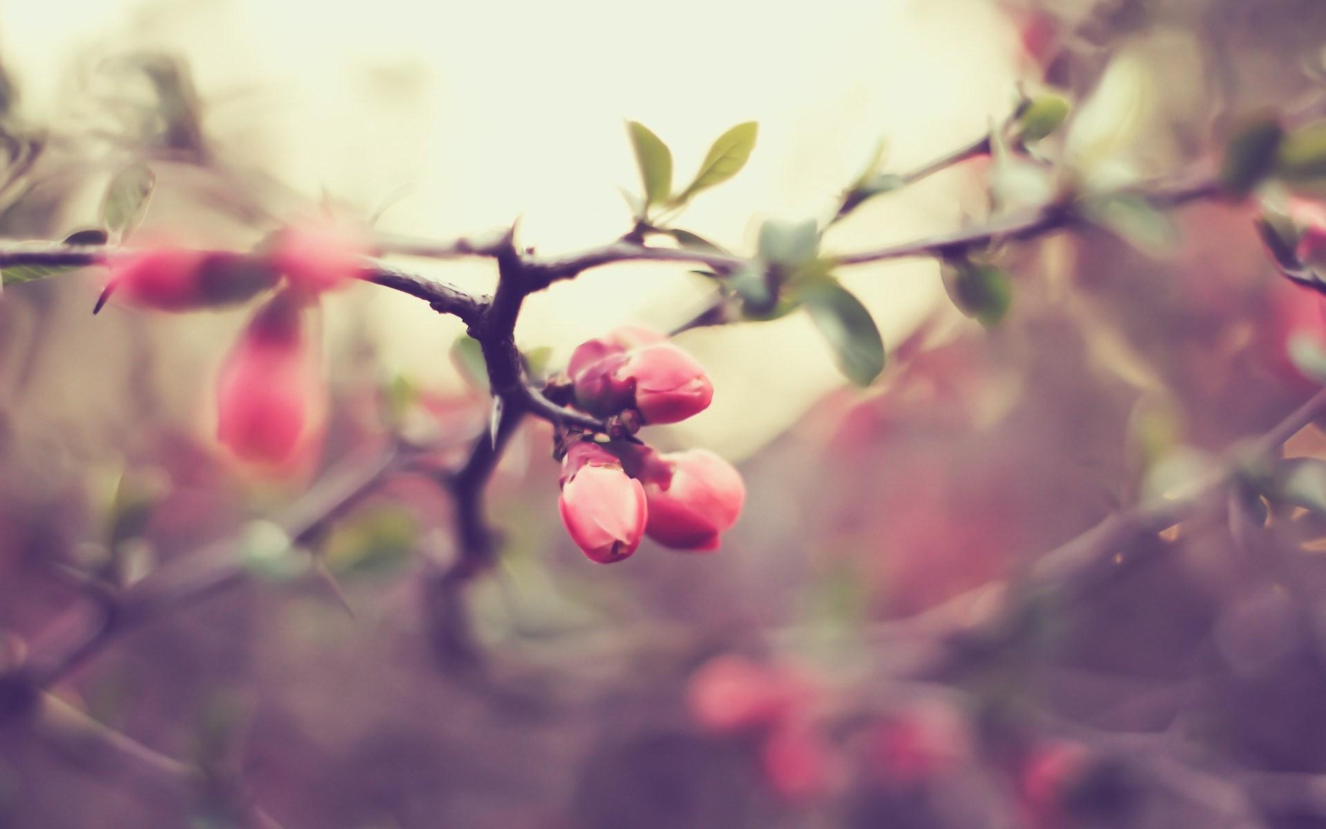 pink macro wallpaper 37835