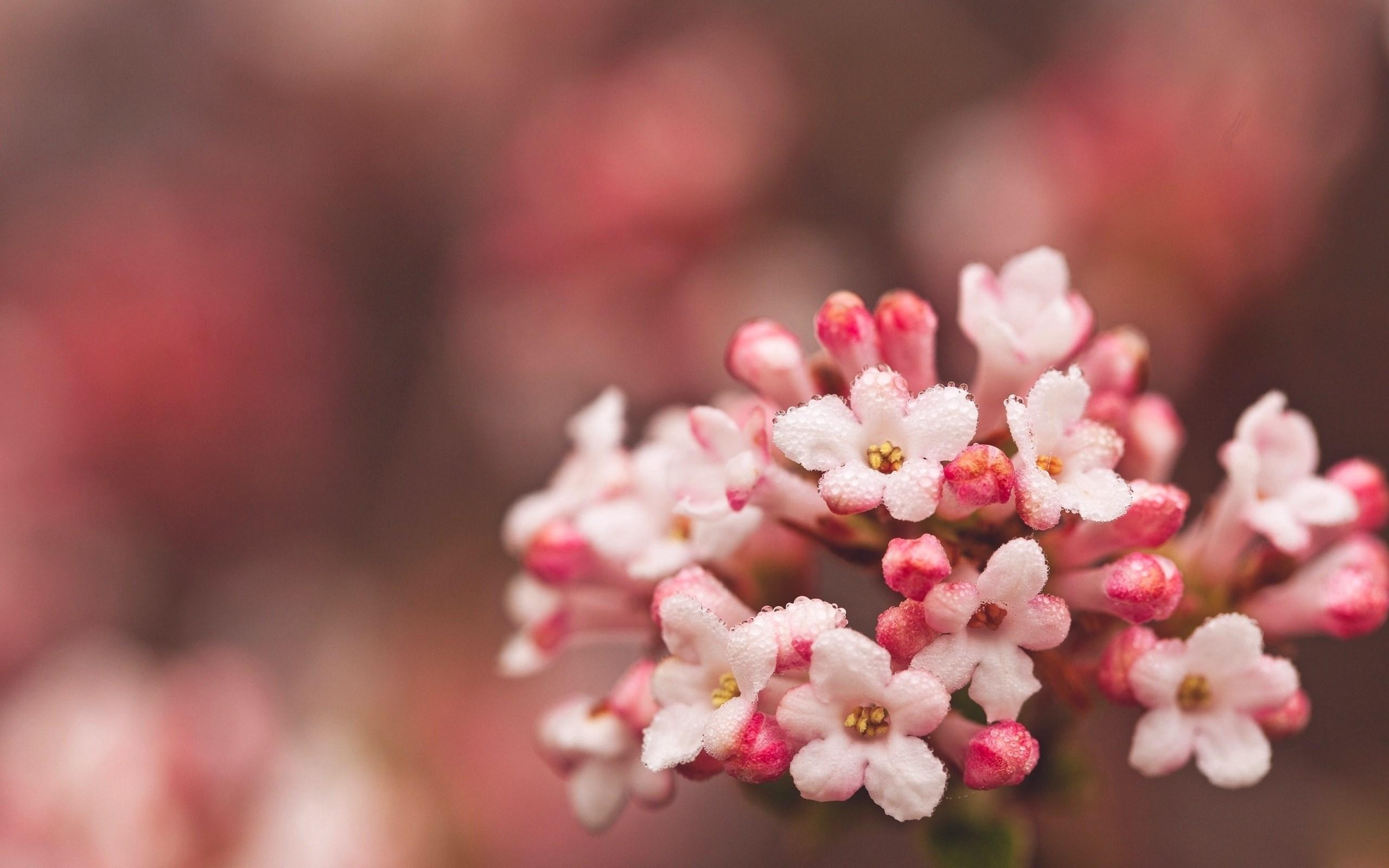 pink macro wallpaper 37856