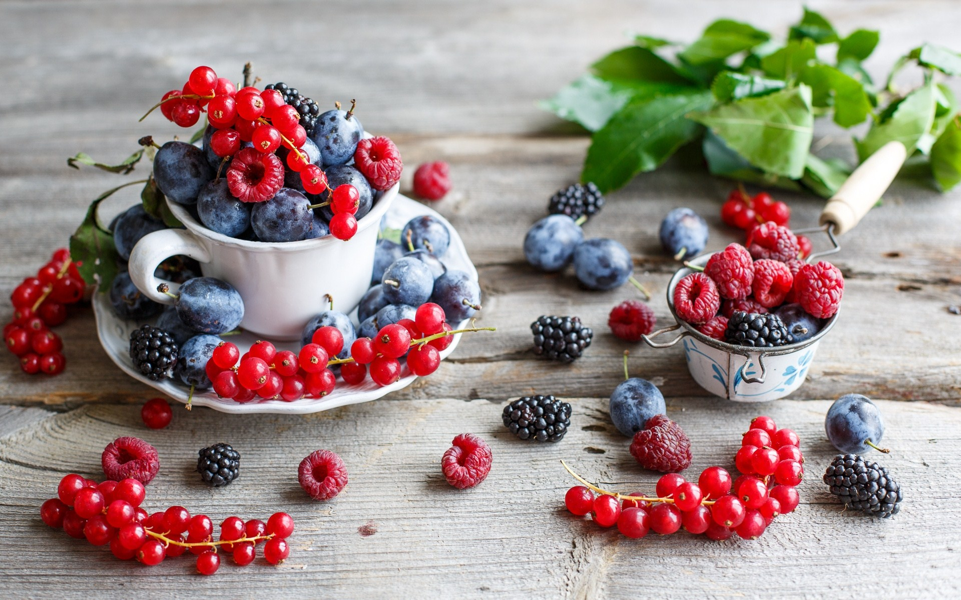plum fruit wallpaper 43642