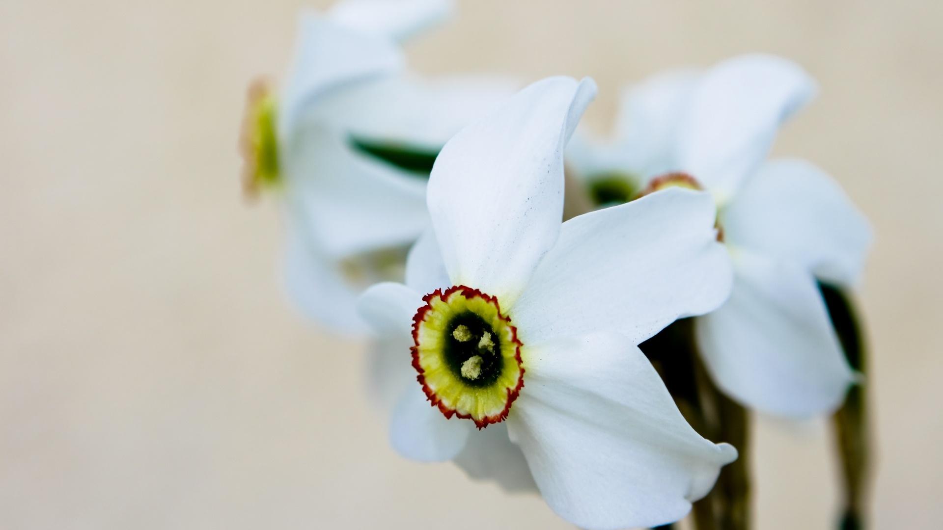 pretty dogwood flowers wallpaper 37246