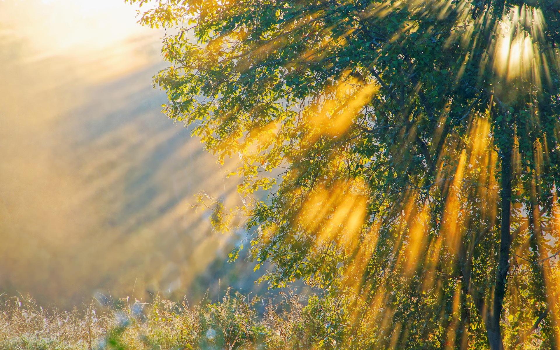 pretty morning sunshine wallpaper 43935