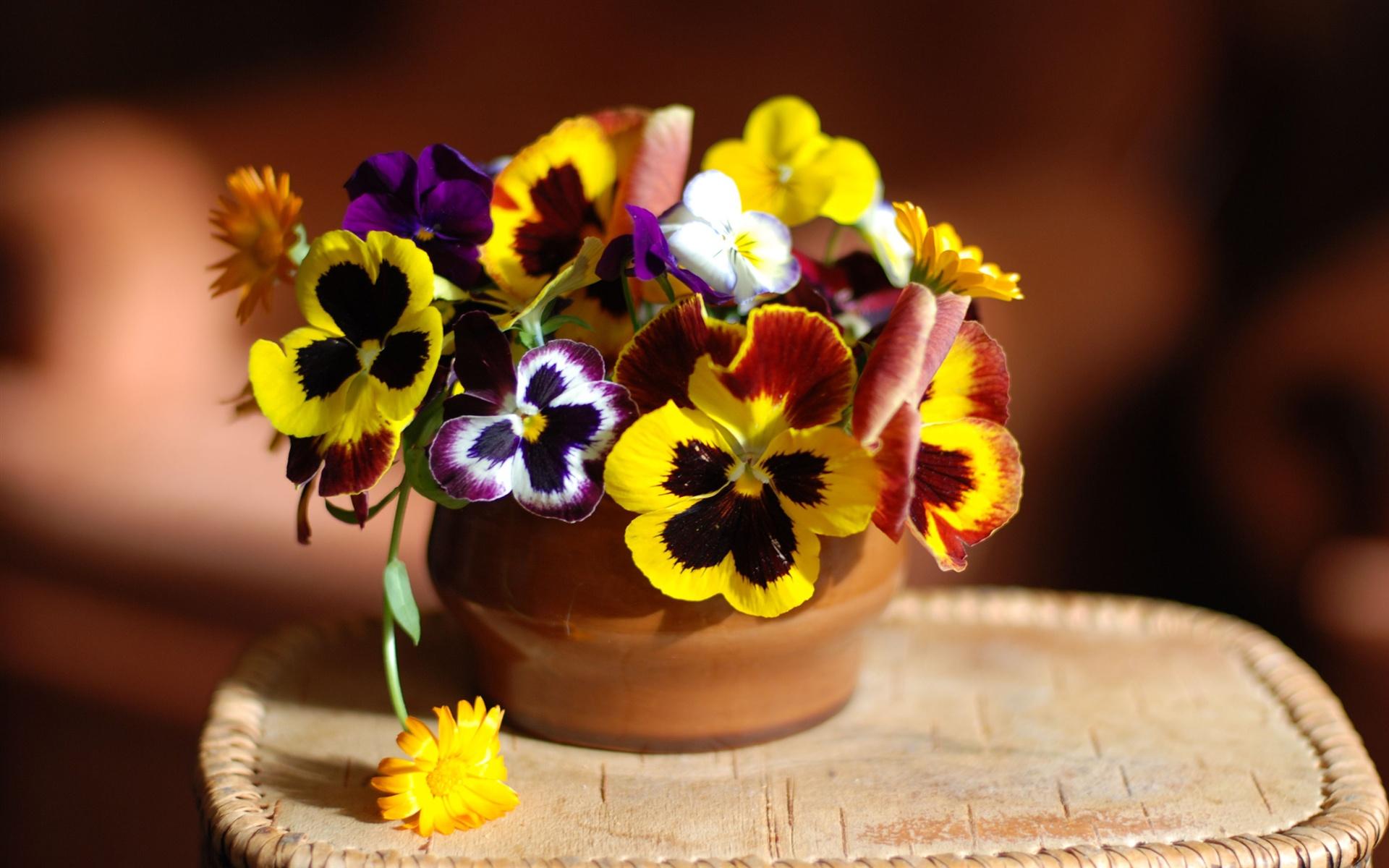 pretty pansy flowers wallpaper 43225