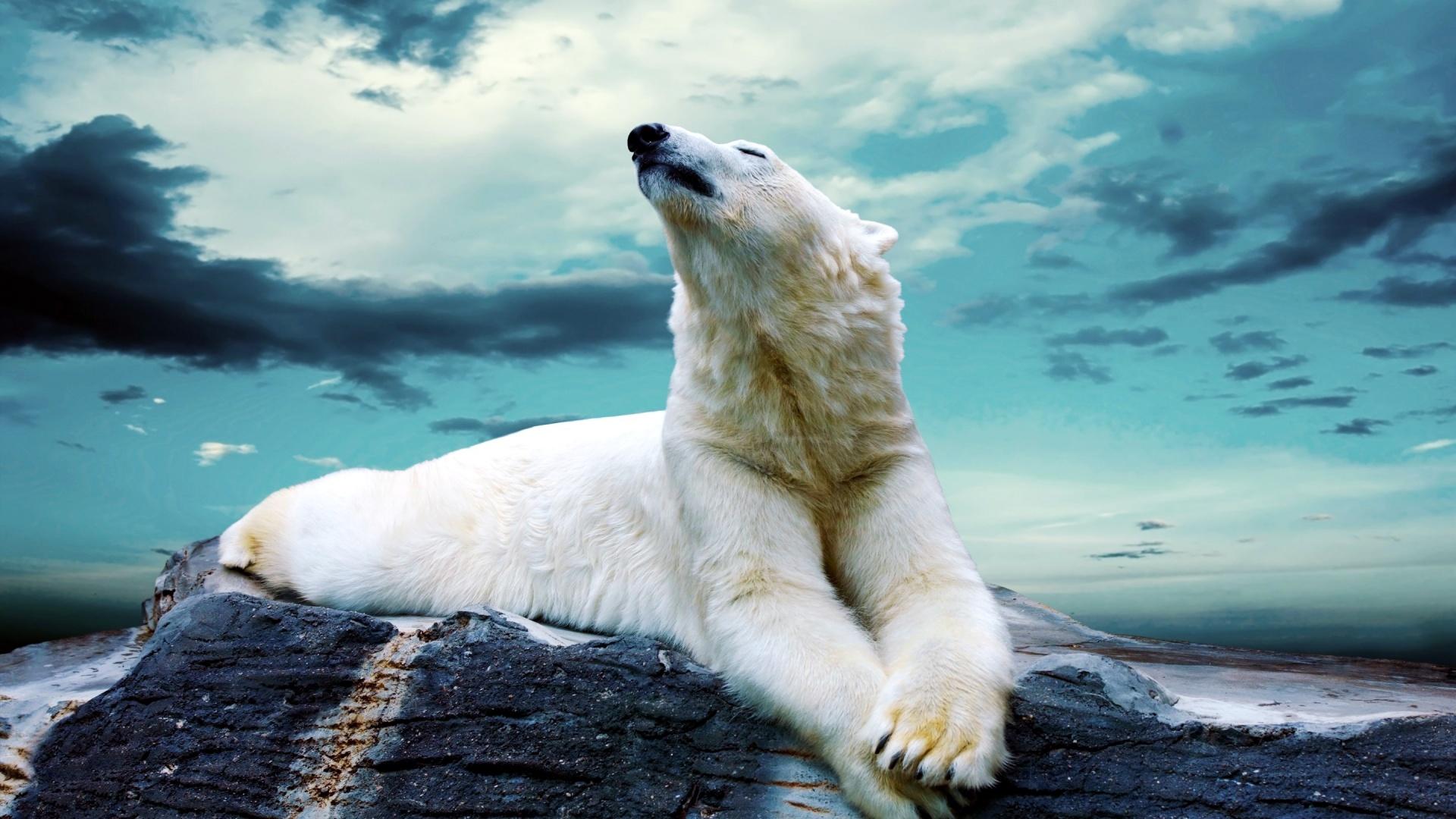relaxing animal wallpaper 25142