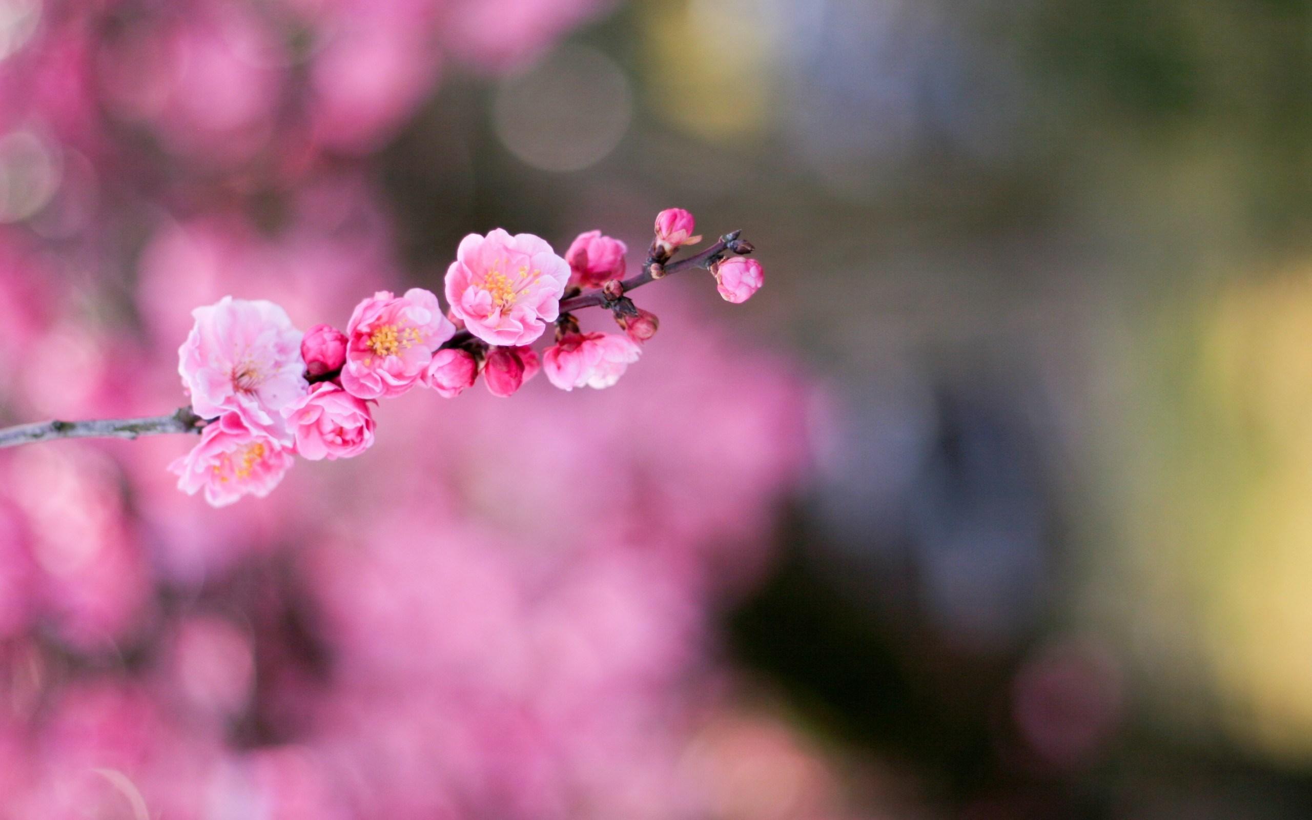 stunning pink macro wallpaper 37834