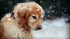 Adorable In Snow Wallpaper 38534