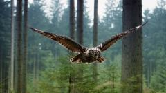 Amazing In Flight Wallpaper 38346