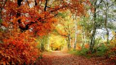 Amazing Woodland Wallpaper 37126
