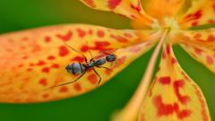 Ant Wallpaper 44256