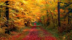 Autumn Forest Wallpapers 21503