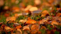 Autumn Leaves Wallpaper 44432