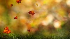 Autumn Leaves Wallpaper 44434