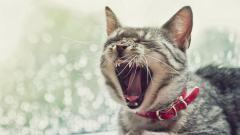 Awesome Animal Yawn Wallpaper 40114