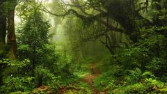 Awesome Forest Footpath Wallpaper 44966