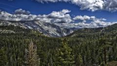 Awesome HDR Forest Wallpaper 38914