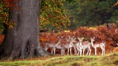 Baby Deer Background 38520