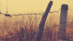 Barbed Wire Fence Wallpaper 44958
