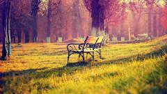 Beautiful Bench Wallpaper 31641