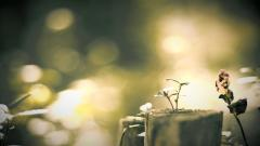 Beautiful Blurred Wallpaper 36383