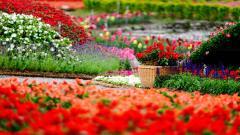 Beautiful Flower Park Wallpaper 44704